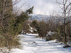 Keferdebiane winter nature Lebanon